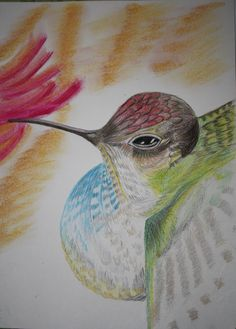 Hummingbird in colored pencil by Denise Crawford