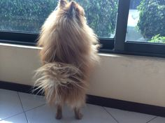 Osito en la ventana