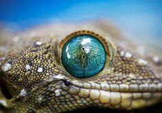 #reptilia