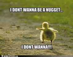 Top 40 Funny animal picture quotes #joke
