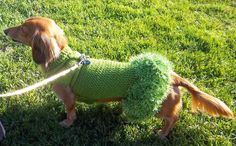 Lena's Miniature Dachshund Dog Dress