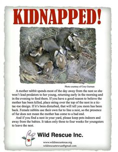 Please do not kidnap wild rabbits!!!!!!