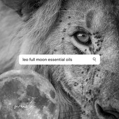 Essential Oils to use in your Leo Full Moon rituals