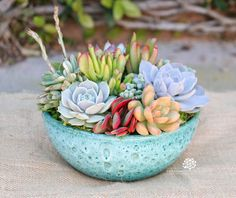 Succulent arrangement in a stunning turquoise round container. The container has a stone textured surface that is very unique that brings out the colors in the succulents. The container measures approximately 8diameter by 3.5 H (without succulents). This will make a great housewarming or dinner party gift. Or treat yourself by having beautiful things around you. You will receive the succulents in the turquoise round container packaged very carefully. You will receive this exact arrangement…