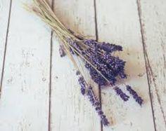 Resultado de imagem para lavender art