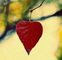 autumn love  #diamondcandles #harvestcontest2012