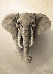 elephant animal illustration wild nature
