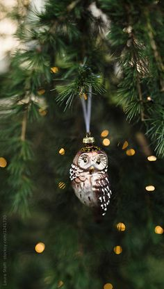 Old glass owl christmas ornament hang from tree close to lights by Laura Stolfi - Christmas tree, Owl - Stocksy United Origin Of Christmas, Christmas Owls, Woodland Christmas, Glass Christmas Tree Ornaments, Christmas Mood, A Christmas Story, Country Christmas, Christmas Lights, Christmas Wreaths