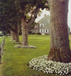 unter b umen unter b umen pinterest g rten pflanzen und schattengarten. Black Bedroom Furniture Sets. Home Design Ideas