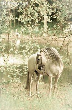 Picture perfect Equine portrait || grey english bridle
