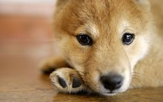 Lovely Puppy Photos - Studio shots of Cute Puppies - Widescreen Lovely Puppy wallpapers 1440x9005