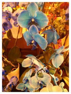 Blue & Purple Orchids. Alibjeweled.