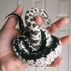Pretty Snakes, Cool Snakes, Beautiful Snakes, Colorful Snakes, Pretty Animals, Cute Funny Animals, Cute Baby Animals, Animals Beautiful, Les Reptiles