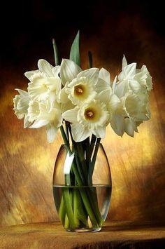 daffodils /vase et fleurs Still Life Flowers, Love Flowers, Spring Flowers, White Flowers, Beautiful Flowers, Beautiful Things, Arte Floral, Deco Floral, Tulips Garden