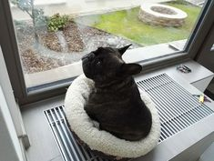 """I'm finally WARM, don't judge me"", classic French Bulldog on the Heater vent ; }"