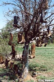 """Cowboy Boot Tree at Dot's Mini Museum, Vega, TX.  The """"museum"""" is about the only thing in Vega, whose claim to fame is that it's halfway between Chicago and LA along Route 66."""