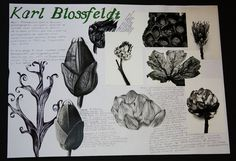 sketchbook pages artist research A Level Art Sketchbook, Sketchbook Layout, Sketchbook Pages, Sketchbook Inspiration, Artist Sketchbook, Sketchbook Ideas, Natural Form Artists, Natural Forms Gcse, Karl Blossfeldt