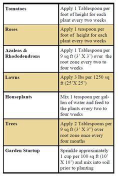Epsom Salt in the Garden - helps acidic plants (like tomatoes) look greener and healthier!