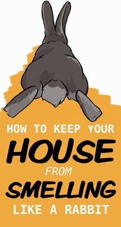 Pet Bunny Rabbits, Meat Rabbits, Raising Rabbits, Dwarf Bunnies, Bunny Cages, Rabbit Cages, Rabbit Toys, House Rabbit, Indoor Rabbit Cage