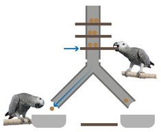 Concept: Y-shaped kerplunk foraging enrichment for animals. Animals must move between three points to remove the sticks and to get all the dropping food. Tube can split to more 'branches' than two.