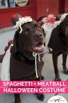 I had the idea to dress my two chocolate labradors up as Spaghetti and Meatballs for Halloween! This DIY costume is made with felt, yard and foam craft balls. If you love to eat, or if you're Italian, this is the perfect DIY dog Halloween costume! This dog costume is so unique, you will not see anyone else with it! Stand out as Spaghetti and Meatballs! This costume is dog walk friendly (although you might loose a few meatballs!). Mom Costumes, Dog Halloween Costumes, Dog Washing Station, Chocolate Labradors, Chocolate Labs, Durable Dog Toys, Dog Jumpers, Dog Raincoat, Dog Birthday