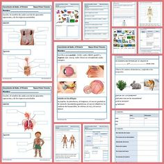 154 best Conocimiento del Medio images on Pinterest | The human body ...