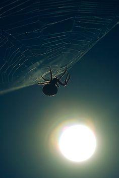 Full moon spider by Simon Christen - iseemooi, via Flickr