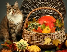 """""""I'm thankful for a warm bed, yummy food, and a human who loves me..""""  What about you? http://amyshojai.com/thanksgiving-pet-writer-way-giving-furry-thanks/"""