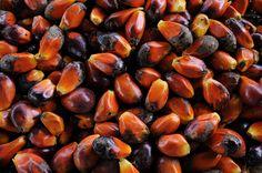 Aromas do Cumbuco: COMO É FEITO O AZEITE DE DENDÊ?