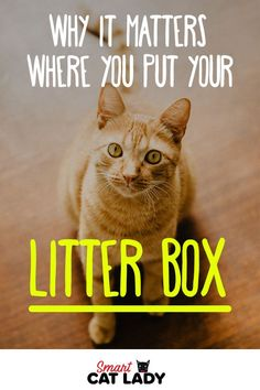 Cat Care Kittens Cat litter box placement is important to litter training your cat and to prevent your cat spraying and marking all over your house. Check out these cat care tips to get the lowdown. Raising Kittens, Cats And Kittens, Kitty Cats, Cat Care Tips, Pet Care, Pet Tips, Son Chat, Kitten Care, Cats Diy