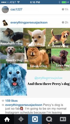 Aaaaaaannnnnd then there's Percy.*percy walks by wearing a little mermaid costume*. I also imagine Percy has a blue Labrador retriever or golden retriever that's blue Percy Jackson Fan Art, Percy Jackson Memes, Percy Jackson Books, Percy Jackson Fandom, Leo Valdez, Magnus Chase, Solangelo, Percabeth, Snoop Dogg