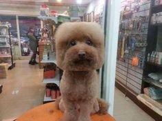 Shaving Dogs Into Cubes Is A New Japanese Craze And We Can't Stop Staring | MTV