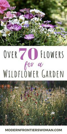 Cottage Garden Design, Modern Garden Design, Garden Beds, Garden Plants, Gypsophila Elegans, California Poppy, Wildflower Seeds, Grow Your Own Food, Outdoor Landscaping