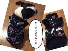 ボストンテリアのカールさんの暮らし: おしゃれすぎる!セーターやトレーナーをリメイクして簡単に作れる犬服の作り方