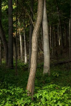https://flic.kr/p/AYBkEX | Early Fall II - Nichols Arboretum, Ann Arbor, MI, September, 2015 | NAP_Canon EOS 5D Mark III_20150927_GL5C4468_0146-Edit.tif
