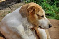 JSPuzzles - Play free Jigsaw puzzles online - A Cute Dog