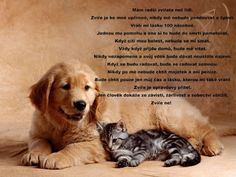 Google+ Cute Instagram Captions, Dog Quotes, True Words, Cool Words, Animals And Pets, Love You, Humor, Dogs, Psi