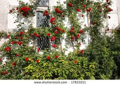 Google Image Result for http://image.shutterstock.com/display_pic_with_logo/58988/58988,1222167098,2/stock-photo-an-english-country-garden-with-flowers-climbing-up-a-the-wall-of-a-timber-framed-house-17853211.jpg