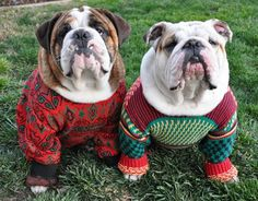 What could be better than bullies in sweaters!
