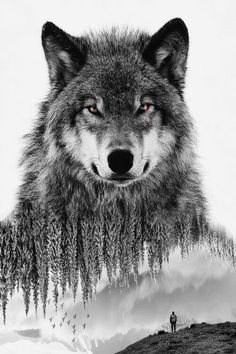 Discover the coolest #doubleexposure #blackandwhite #wolf #surreality images