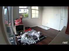 Perros presienten terremoto antes de que ocurra - YouTube