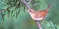 How to Attract Wrens to a Garden | eHow