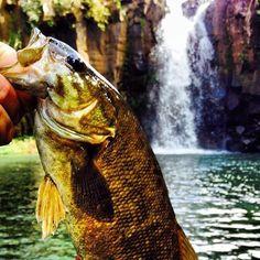 A Hawaiian smallmouth from Who knew? Destin Fishing, Bass Fishing Tips, Fishing Boats, Fly Fishing, Tennessee Valley Authority, Australian Bass, Fishing Photography, Bass Boat, Types Of Fish