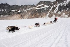 Dogsledding through Alaska.
