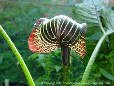 Rare Exotic Plants | Rare Plants, Rare Trees, Rare Flowers)