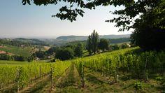 """Die Einzellage """"Grassnitzberg"""" des Weinguts SKOFF ORIGINAL Vineyard, The Originals, Outdoor, Wine, Boden, Outdoors, Vine Yard, Vineyard Vines, Outdoor Games"""