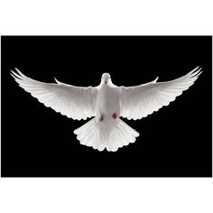Each Symbol of the Holy Spirit Reveals Something of His Identity. The Dove. Today is Pentecost Sunday, a time to honour the Holy Spirit. But who is this Holy Spirit? First, the Holy Spirit is divin… Santas Tattoo, Dove Images, Dove Pictures, Bing Images, Dove Wing, Vogel Tattoo, Dove Tattoos, Prophetic Art, White Doves