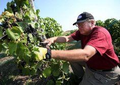 Winemaking Service