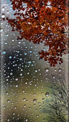 Autumn leaves and raindrops wallpaper iphone photography, photography tips, autumn rain, fall winter Wallpapers Android, Ombre Wallpapers, Rain Wallpapers, Wallpaper Backgrounds, Fall Wallpaper, Colorful Wallpaper, Flower Wallpaper, Autumn Rain, Autumn Trees