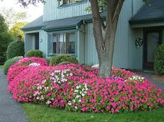 5 top plants for lazy gardenersImpatiens   Wave petunias   Hostas   Coleus   Montauk Daisies